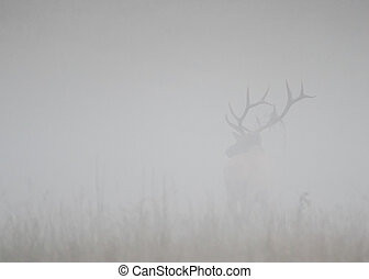 Bull Elk Stands at Attention in Thick Fog