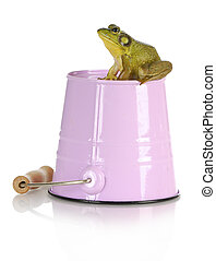 bull frog sitting on pink pail with reflection isolated on...