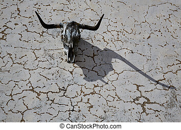 Bull head horns skeleton in a wall with shadow