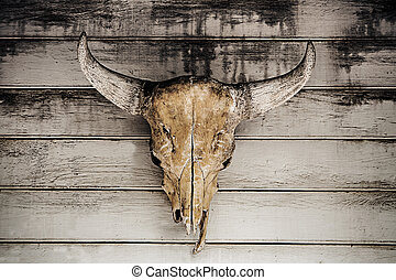 bull head skull hanging on wood wall