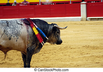 bull in a bullfight in Granada