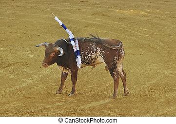 Bull in Bullring, Huelva, Spain.
