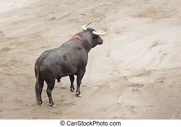 bull in the arena