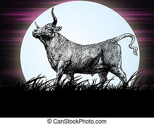 Bull in the night