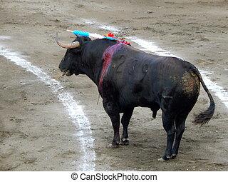 bull inside the arena. bull in the bullfighting.