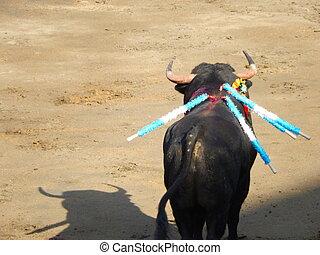 bull inside the arena. Spanish bull