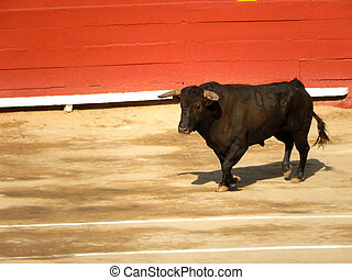 bull inside the arena. Spanish bull