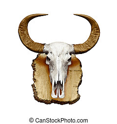 Bull skull with horns on white