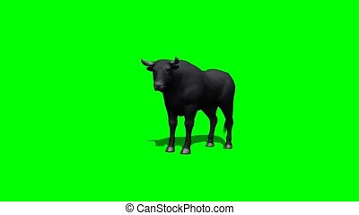 bull stands and looks around with shadow on the floor -...