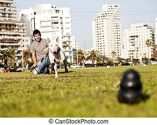 Bull Terrier Running for Chew Toy in Park