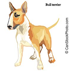 Bull terrier vector illustration - Portrait of standing Bull...