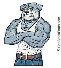 bulldog, agresszív, erős, izom