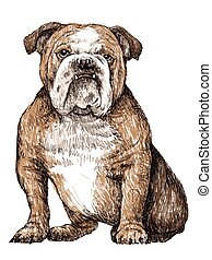 bulldog - Bulldog , hand draw vector.