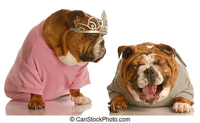 bulldog bullying - english bulldog laughing at another dog...