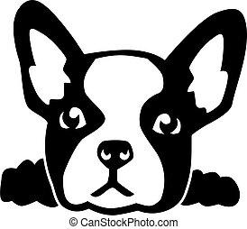 bulldog, cabeza, francés