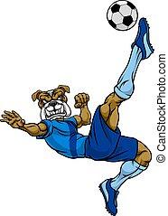 bulldog, calcio, sport, giocatore, mascotte, football