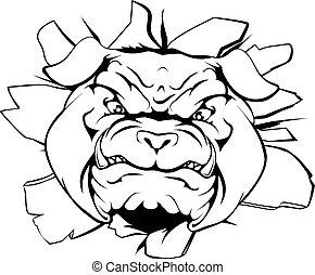 bulldog, carattere, frantumare, fuori