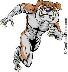 bulldog, correndo, mascotte