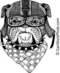Bulldog, dog. Animal wearing motorycle helmet. Image for...