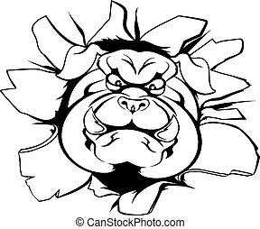 bulldog, doorbraak, mascotte