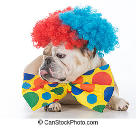 dog dressed like a clown