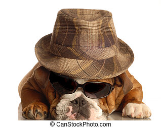 bulldog dressed up like gangster with fedora hat and sunglasses