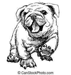 Bulldog puppy hand draw vector