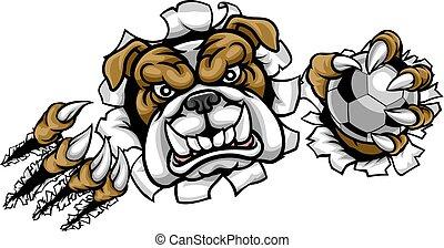 bulldog, futball foci, kabala