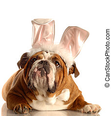 bulldog, gekleede op, als, paashaas