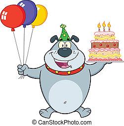 bulldog, grigio, compleanno
