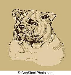 Bulldog head - hand drawn illustration -sketch in vintage...