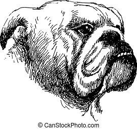 Head of bulldog hand draw vector