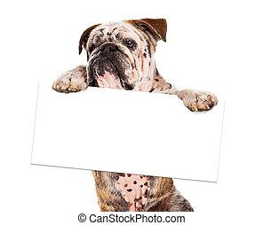 Bulldog Holding Blank Sign