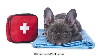 bulldog, hulp, eerst, franse , uitrusting