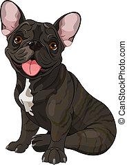 bulldog, lindo