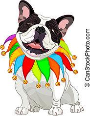 bulldog, llevando, francés, colorido