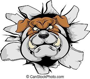 bulldog, mascotte, frantumare, fuori