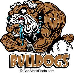 bulldog, muscular, medio