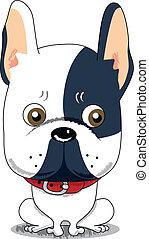 bulldog, schattig, franse