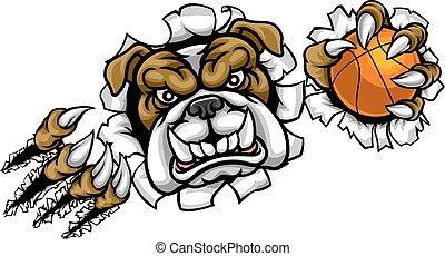 bulldog, sport, pallacanestro, mascotte