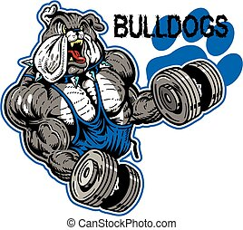 bulldog with muscles