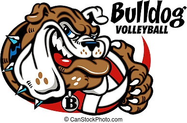 bulldog with volleyball