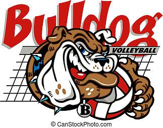 bulldogg, nät, volleyboll