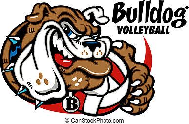 bulldogg, volleyboll