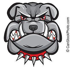bulldogge, böser , kopf