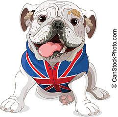 bulldogge, englisches