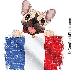 bulldogge, fächer, franzoesisch