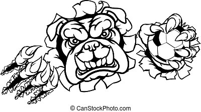 bulldogge, fußballfootball, maskottchen