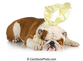 bulldogge, kaninchen, mit, küken