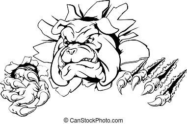 bulldogge, klaue, durchbruch